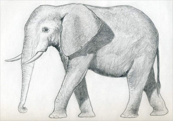 print ready elephant drawing template