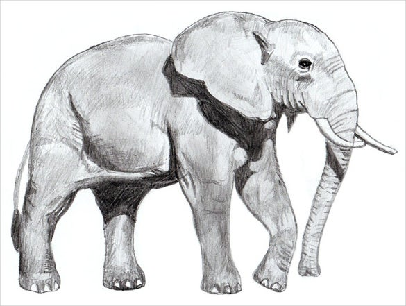 ready to print elephant drawing template
