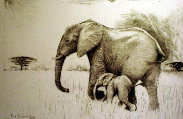 Elephant Drawings – 24+ Free Printable, JPEG, PNG Format ... Realistic Elephant Drawing