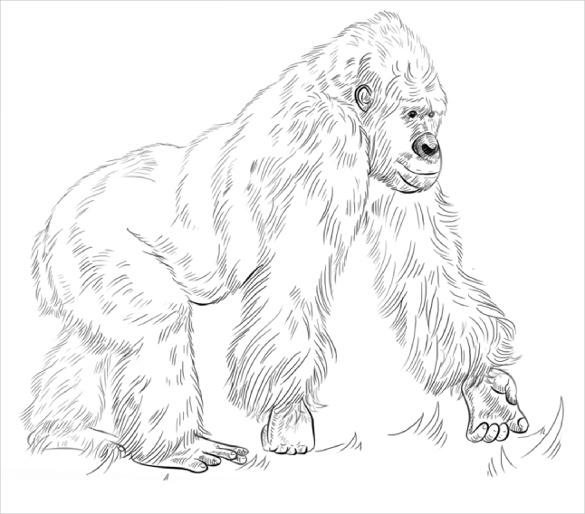 gorilla coloring page pdf free download