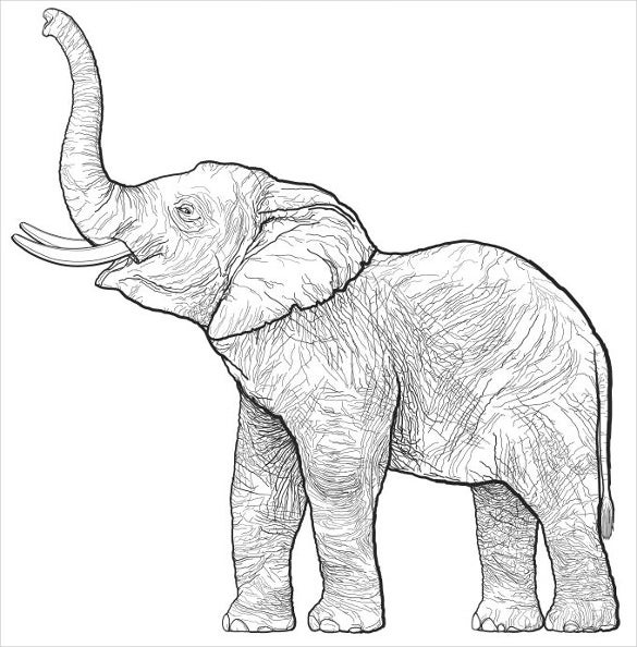 Line Drawing Elephant Face : Elephant drawings free printable jpeg png format
