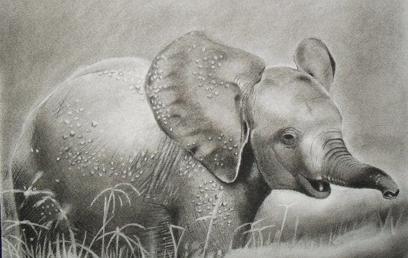 charcoal baby elephant drawing template