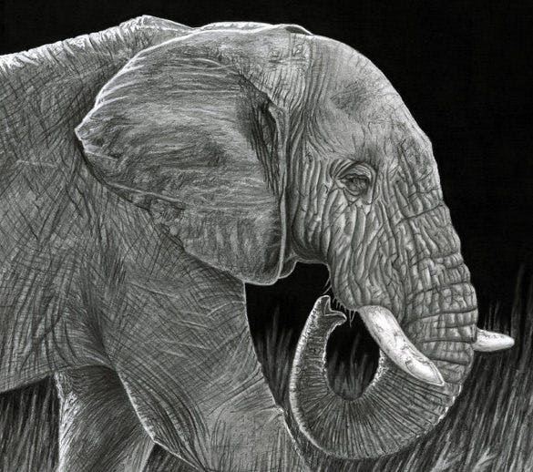 graphite pencil elephant drawing template
