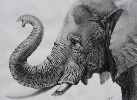unique pencil art elephant drawing template