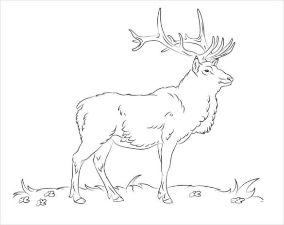 deer coloring page pdf free download