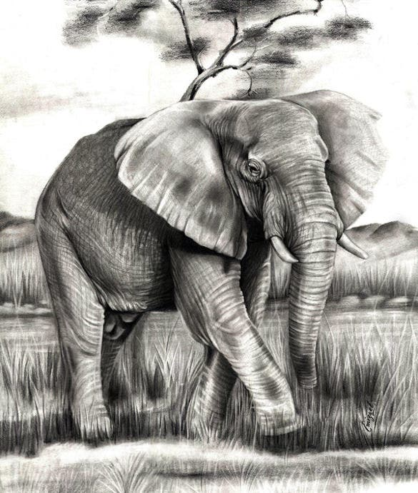 beautiful elephant drawing template