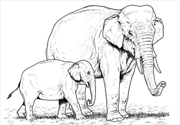 Elephant Baby And Mother Coloring Page PDF Free Download