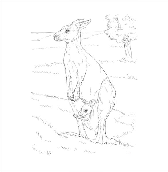 kangaroo coloring page pdf free download