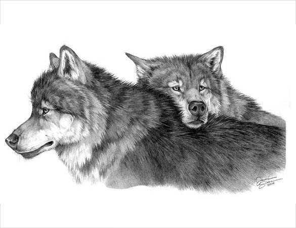 twin wolf drawing template free download