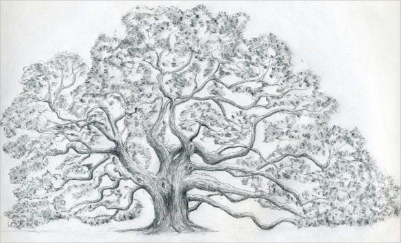 Beautiful drawings of trees
