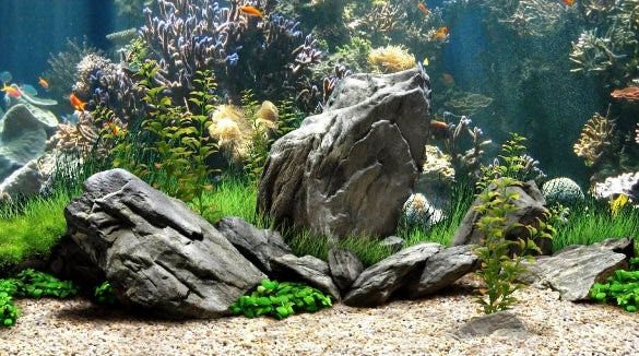 fish tank background template