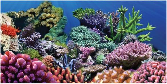 Gutsy image inside aquarium backgrounds printable