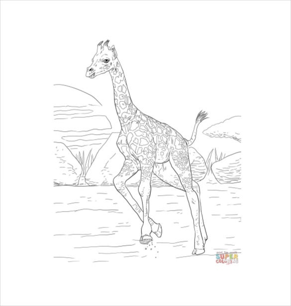 rothschild baby animal giraffe calf free printable template download