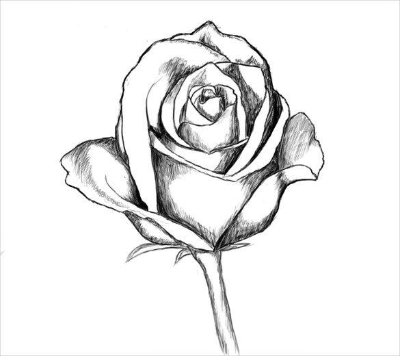 rose drawing template1
