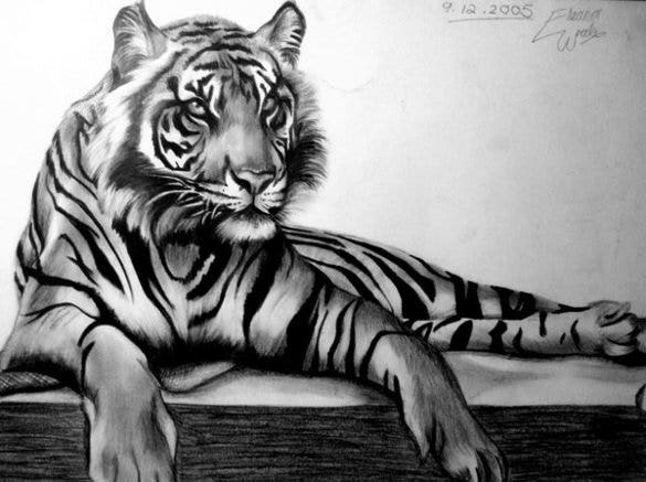 tiger drawing template1