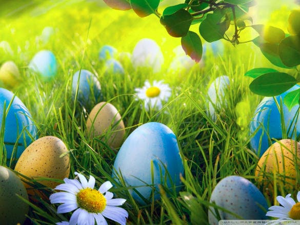 easter background egg hunt download