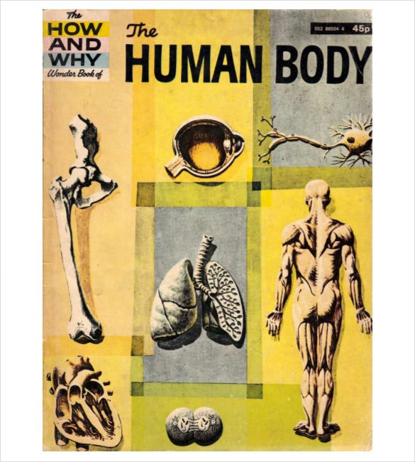 the human body pdf template free download