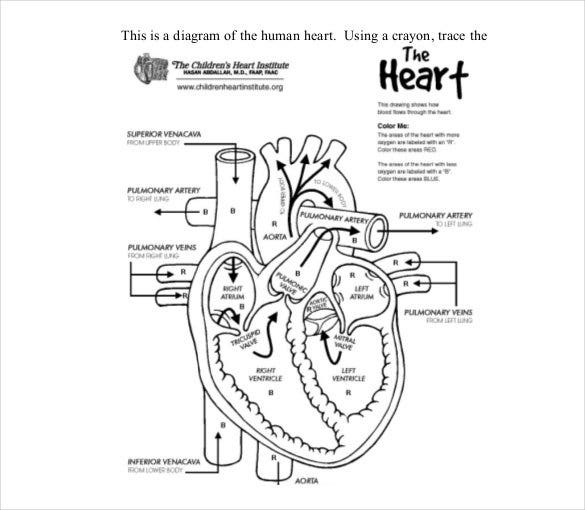 19 heart diagram templates sample example format download this template explicitly describes the different parts of the heart with labels ccuart Image collections