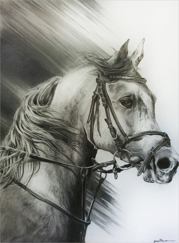 Horse pencil drawing download