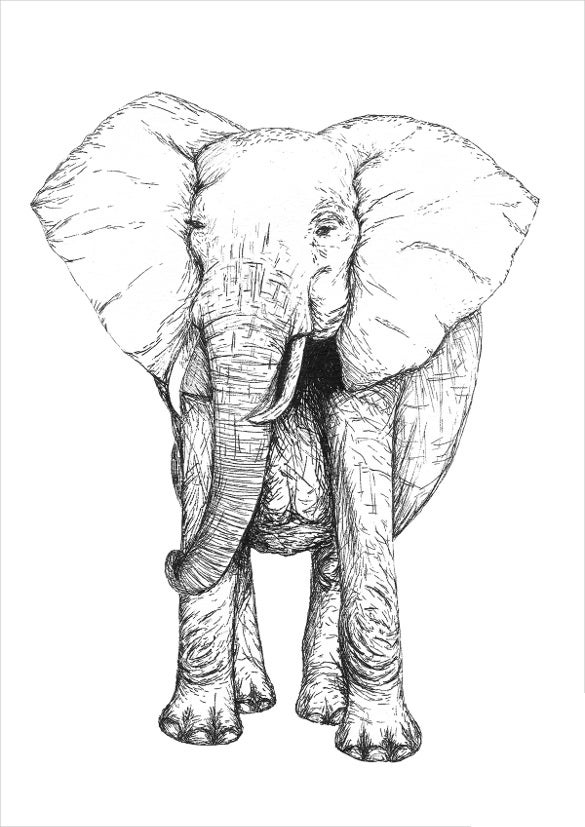 wild elephant drawing
