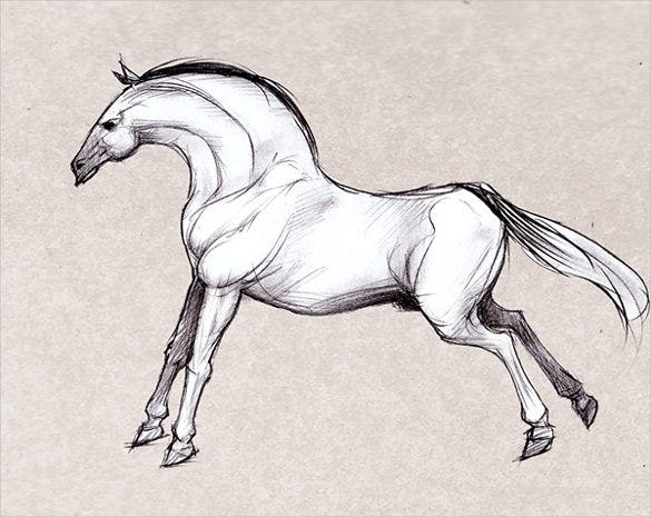 horse animaal drawing