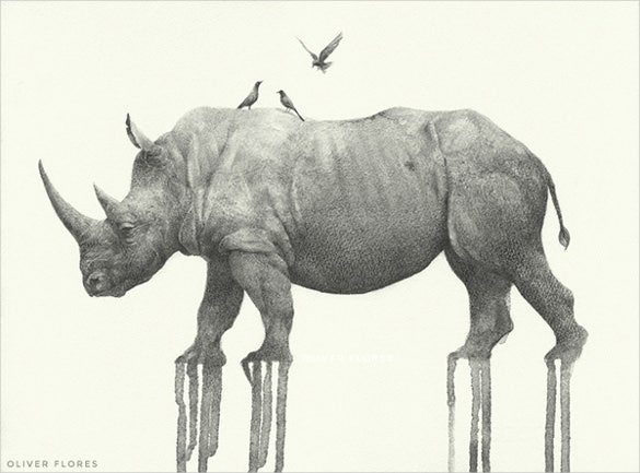 rhinoceros animal drawings