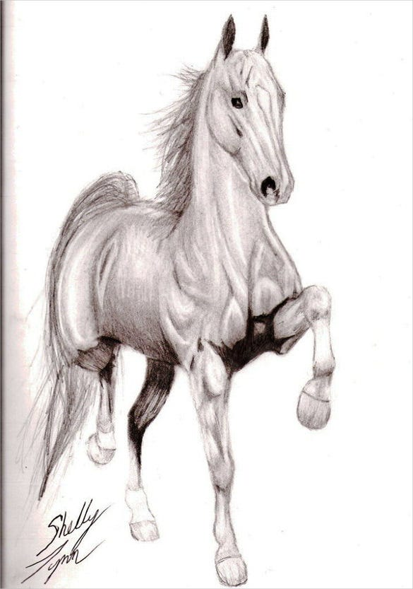 riding horse drawing
