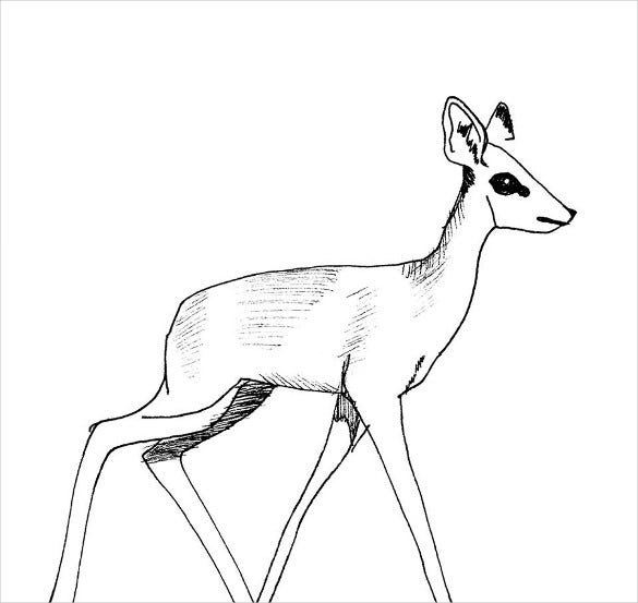 child deer drawing