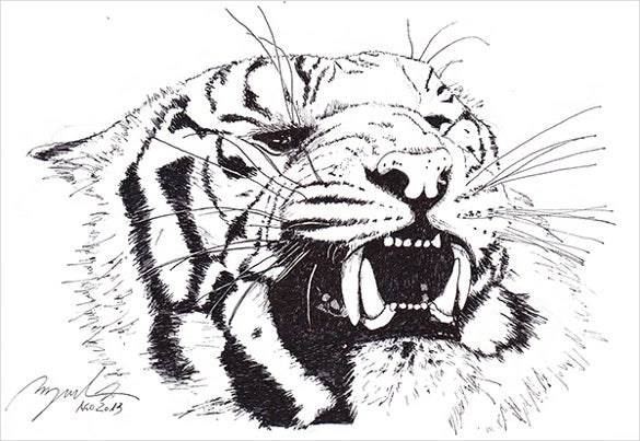 african tiger drawing