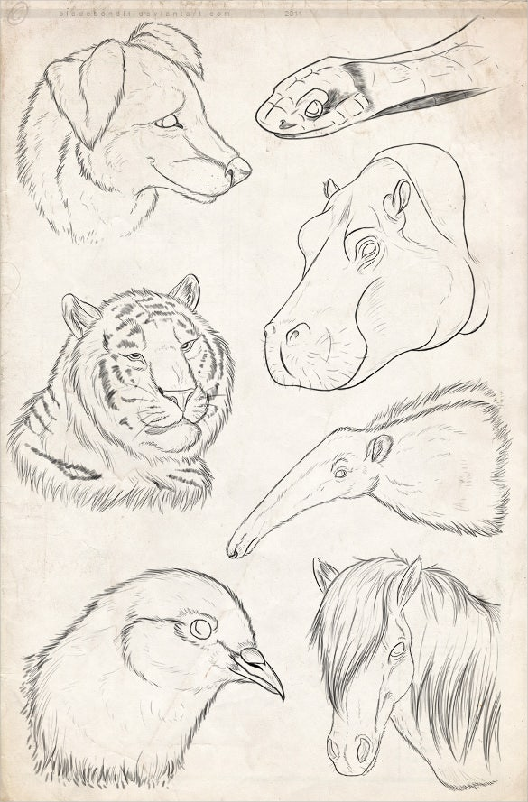 collection of wild animal drawings