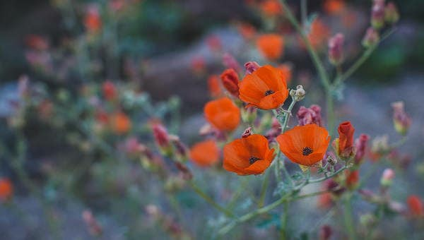 floralpattern