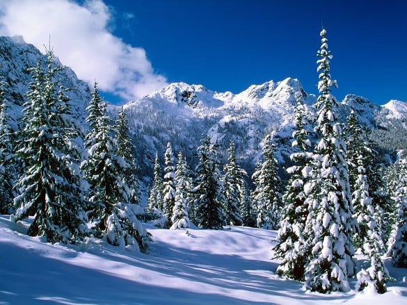 winter nature wallpaper