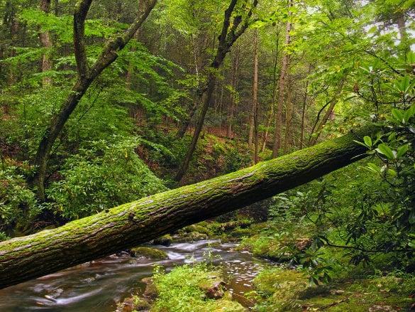 fallen tree nature wallpaper