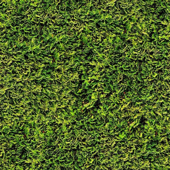 seamless photo realistic texture