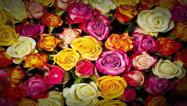 rosedrawing