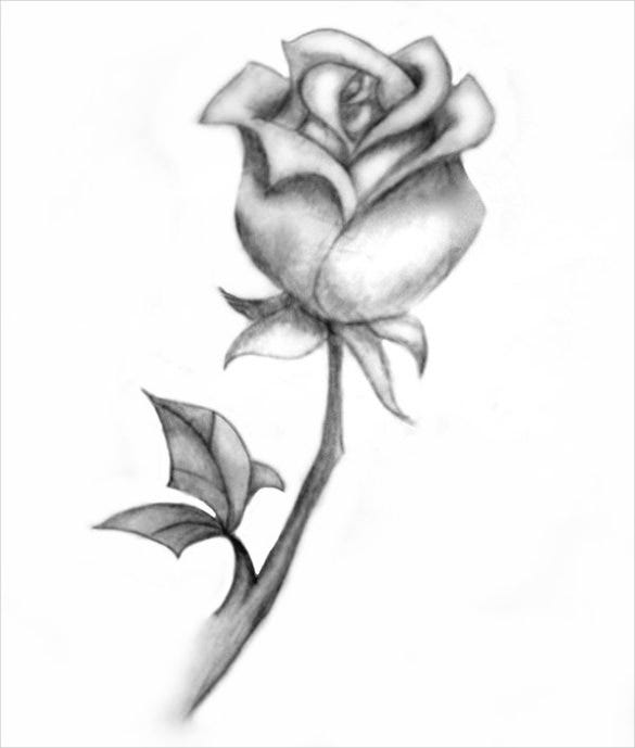 27+ Rose Drawing | Free & Premium Templates