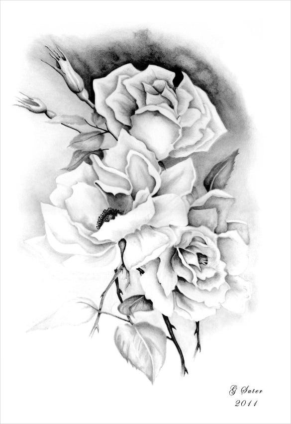 attractive rose drawing