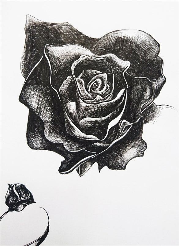 ink pen rose drawing