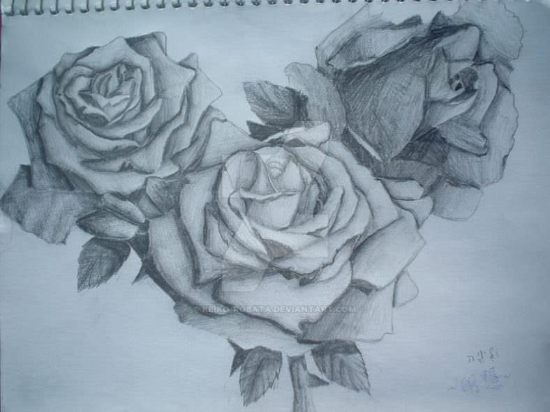 beautiful roses drawing 788x591