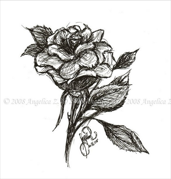 rose pen drawing