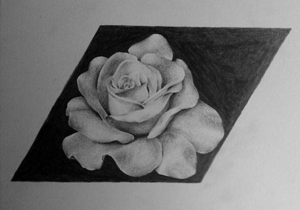 natural rose drawing