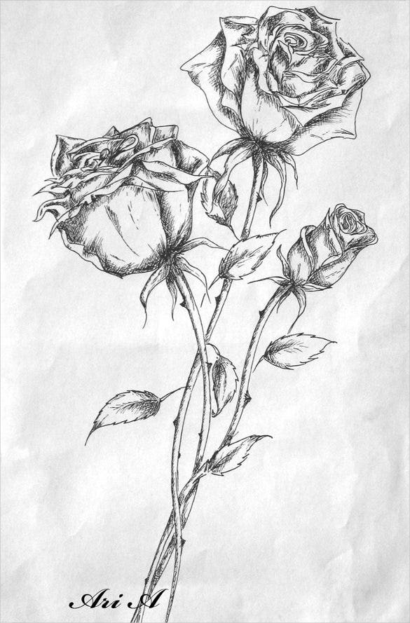 set of roses drawing