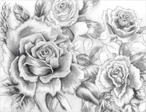 collection of roses drawing