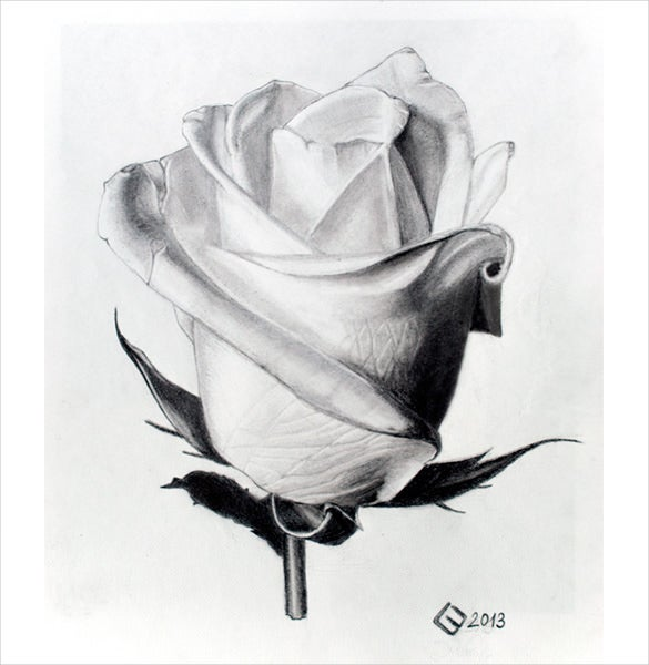 unique rose drawing