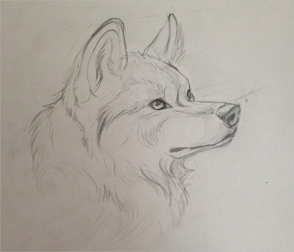 wolf tatoo drawing download