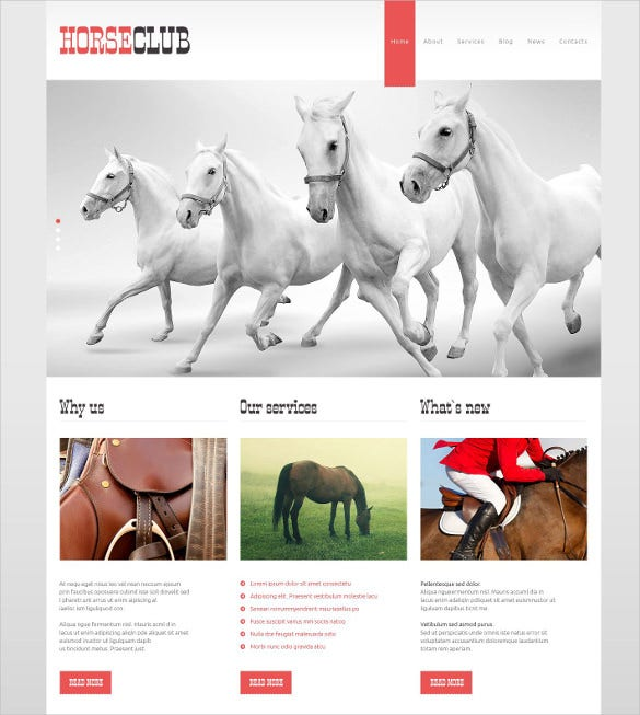animal pet club wordpress php theme