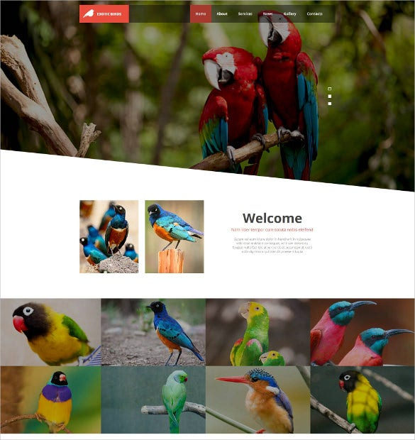 animal pets birds moto website cms html template 139