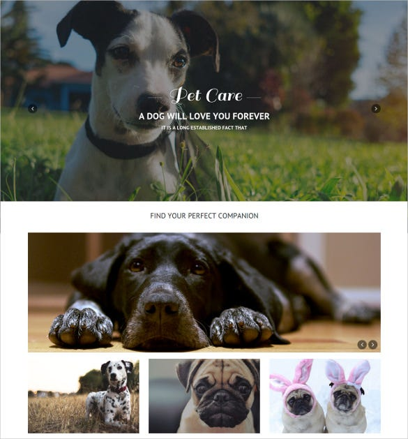animal pet care responsive one page website theme 12