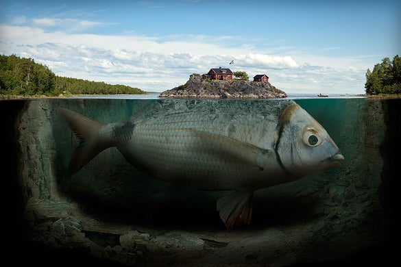 home on the fish creative photo manipulation