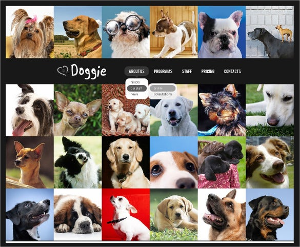 animal dog pets psd template 11